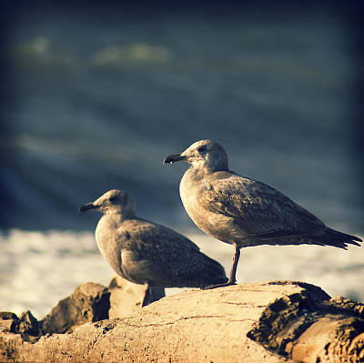 Photograph - Seagulls On A Beach by Yulia Kazansky