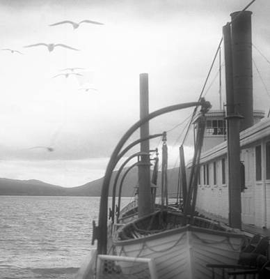 Photograph - Seagulls On A Ferry by Henri Bersoux