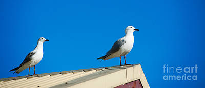 Photograph - Seagulls On Roof Top by Yew Kwang