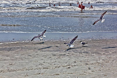Photograph - Seagulls On The Beach by Sennie Pierson