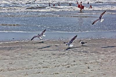 Photograph - Seagulls On The Beach by Sennie Pierson