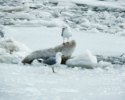 Photograph - Seagulls On The Icy Hudson River by Kristen Fox