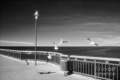 Photograph - Seagulls On The Pier by Colin and Linda McKie