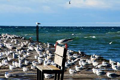Cottage Photograph - Seagulls On The Pier by Michael Allen