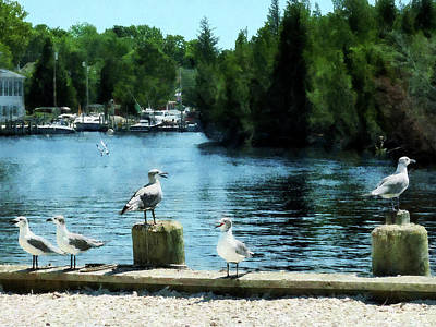 Photograph - Seagulls On The Pier by Susan Savad