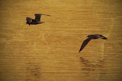 Folk Park Digital Art - Seagulls Over Lake Galena by Photographic Arts And Design Studio