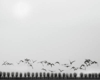 Seagull Photograph - Seagulls Over The Fields by Yvette Depaepe