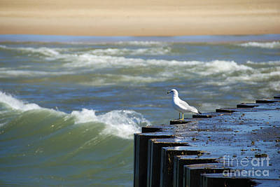 Photograph - Seagull's Perch by Jackie Farnsworth