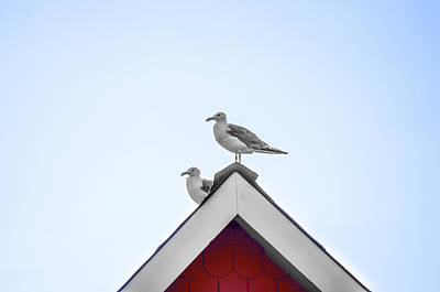 Rooftops Digital Art - Seagulls Perched On The Rooftop by Bill Cannon