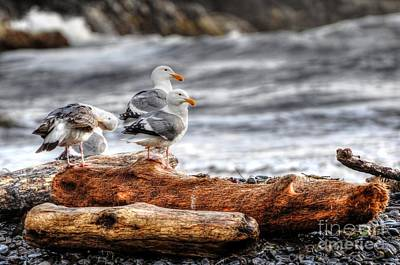 Photograph - Seagulls by Phillip Garcia