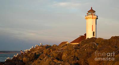 Seagulls Rest Shorebirds Rock Barrier Point Wilson Lighthouse Art Print