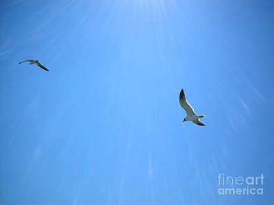 Photograph - Seagulls Soar by Audrey Van Tassell