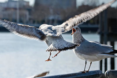 Photograph - Seagulls Squawking by Ann Murphy
