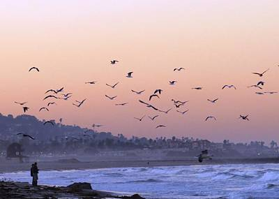 Seagulls Sunrise Art Print