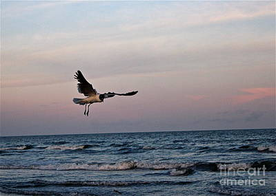 Photograph - Seagull's Sunset Snatch by IK Hadinger