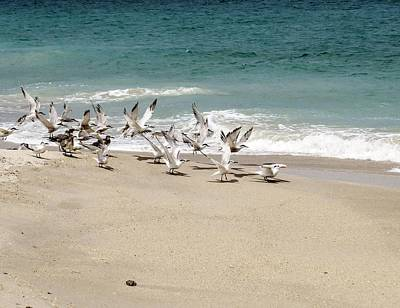 Seagull Photograph - Seagulls Take Off by Zina Stromberg