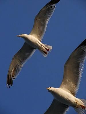 Photograph - Seagulls by Taiche Acrylic Art