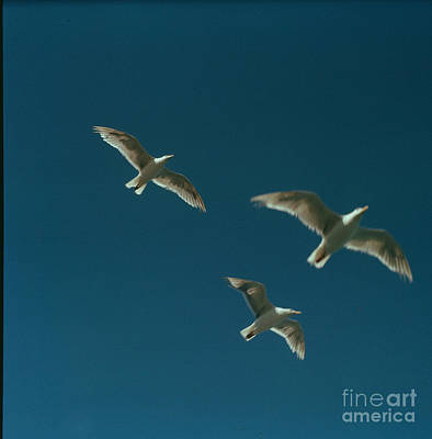 Photograph - Seagulls by Vintage Photography