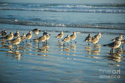 Photograph - Seagulls Waiting by Mina Isaac