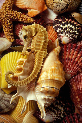 Seahorse Among Sea Shells Art Print