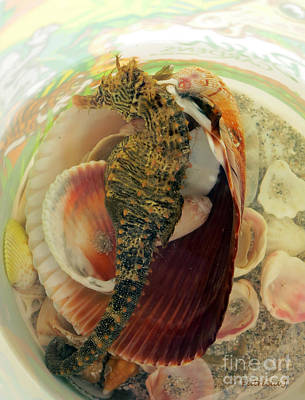 Photograph - Seahorse And Shells by Patricia Januszkiewicz