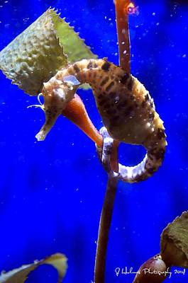 Photograph - Seahorse by Jerome Holmes