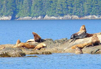 Photograph - Seals 3 by Lew Davis