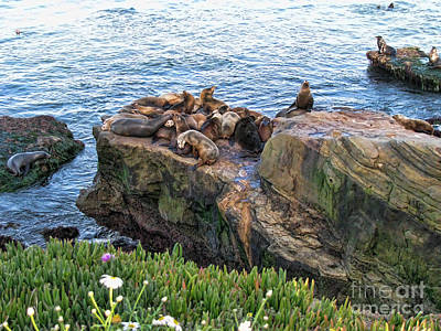 Seals And Pups Art Print by Bedros Awak