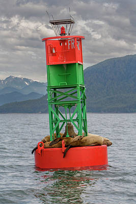 Seals Resting On Buoy Art Print by Tom Norring