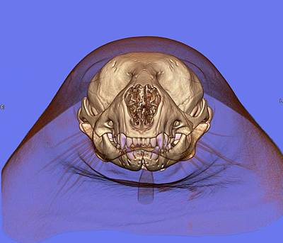 3-d Photograph - Seal's Skull And Head by Anders Persson, Cmiv