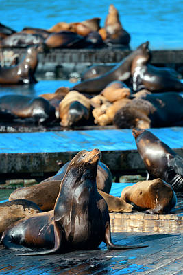 Photograph - Seals by Songquan Deng
