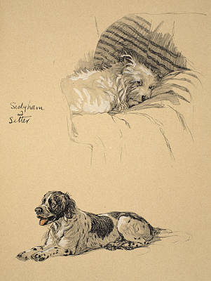 Sealyham And Setter, 1930 Art Print by Cecil Charles Windsor Aldin