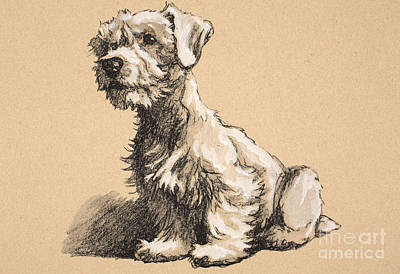Cute Dog Pastel - Sealyham by Cecil Charles Windsor Aldin