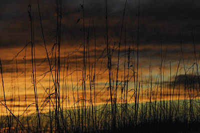 Digital Art - Seaoats Sunset by Michael Thomas