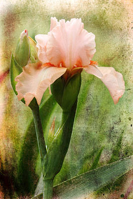 Peach-colored Photograph - Searching  For You by Michael Eingle