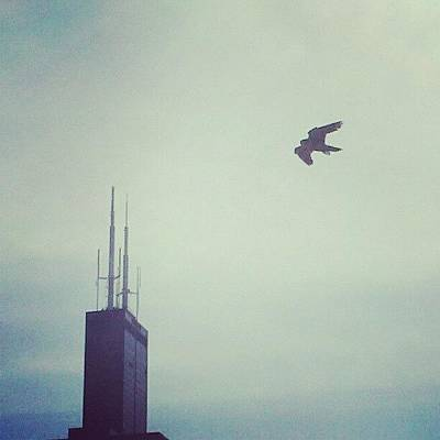 Chicago Photograph - Sears And The Falcon by Jill Tuinier