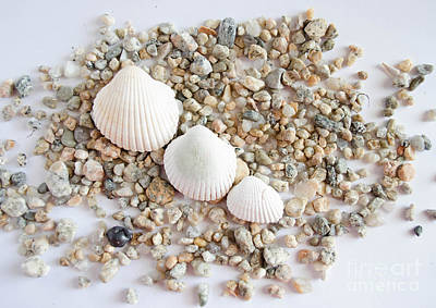 Photograph - Seashell 3 by Andrea Anderegg