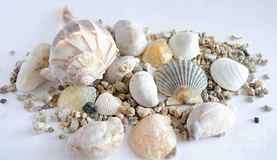 Photograph - Seashell 5 by Andrea Anderegg