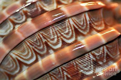 Photograph - Seashell Abstract by Kaye Menner