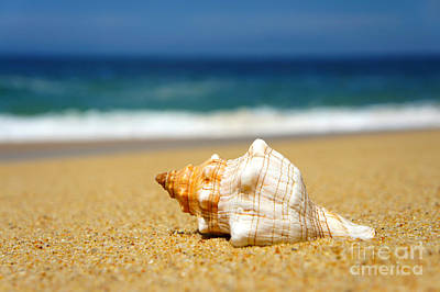 Salt Water Photograph - Seashell by Aged Pixel