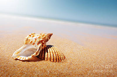 Beach Shell Sand Sea Ocean Photograph - Seashell And Conch by Carlos Caetano