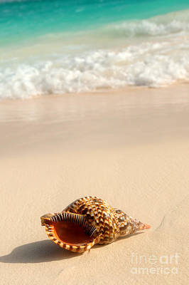 Beach Shell Sand Sea Ocean Photograph - Seashell And Ocean Wave by Elena Elisseeva