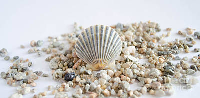 Photograph - Seashell by Andrea Anderegg