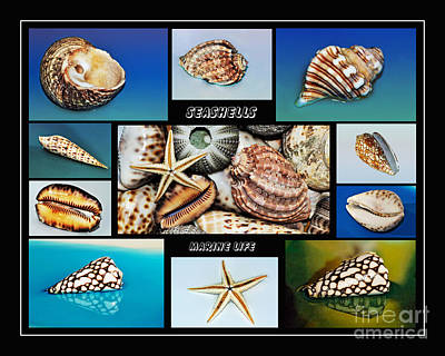 Photograph - Seashell Collection 2 by Kaye Menner