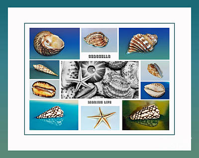 Photograph - Seashell Collection 3 - Collage by Kaye Menner