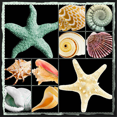 Digital Art - Seashell Collection by Debra  Miller
