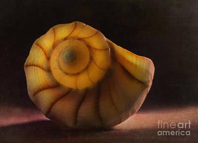 Photograph - Seashell by Elena Nosyreva