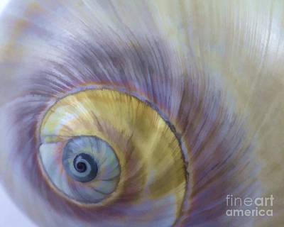 Seashell Photograph - Seashell - Eye Of The Sea by Carole Lloyd