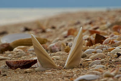 Photograph - Seashell Graveyard by Robert Bascelli