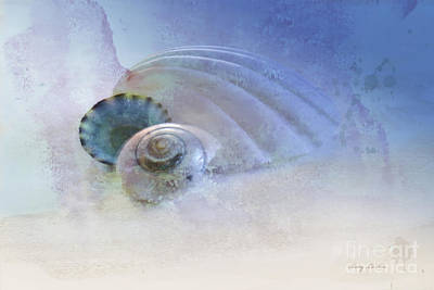Photograph - Seashell In Blue by Betty LaRue